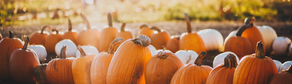 Pumpkin patches to visit in fall near bucks county and philadelphia